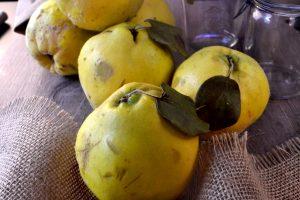 Frutas y verduras de otoño (Recopilatorio recetas)